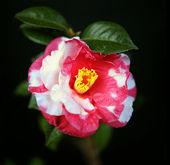 酒と音楽と薔薇がなくて何の人生でしょうか みなさん、おはようございます。 春の訪れはうれしいのですが、毎年招かれざる客に悩まされます。「花粉症