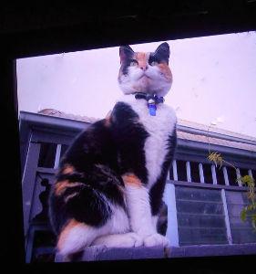 猫の写真を貼っていこう *☆こんばんは*:・゚`☆