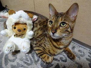 猫の写真を貼っていこう  年賀状用写真