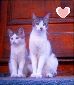 猫の写真を貼っていこう こんにちは~♪