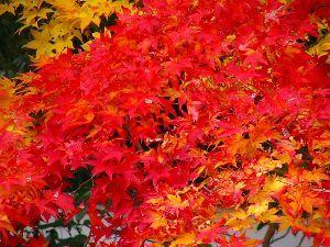 皆様散歩してますか。 今年も紅葉が楽しみです。