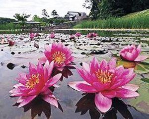 サロンくつろぎ おはよう(^^)  今日は雨です。  南にある台風のせいだね  大雨に注意ですね  とんでもない事件
