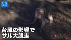 2721 - (株)ジェイホールディングス 津波だ〜津波だ〜、猿が津波にさらわれた〜。爆笑