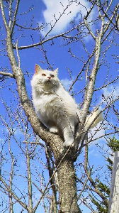 How about writing in English about your everyday things? Hi, good afternoon! The picture below is of my cat