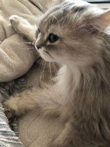 6628 - オンキヨー(株) 猫に小判を( ∩'-'💰⊂ ) 間違えました...。やっぱり大判