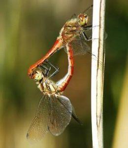 6628 - オンキヨー(株) 縁起の良い 勝ち虫の画像