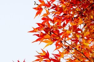 心のおもむくままに 5・7・5  ♪ ♯ 紅葉の、、、始まりたるや、、、雨の宵  草津は、雨ばかり、、、