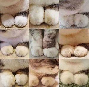 ^DJI - NYダウ ddd様、こんにちは(^-^)/ dddさん、優しいですね、感謝を込めて、 週末、忙しそうなので猫の