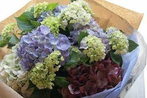 インフォテリア 情報早見専用 平野社長...紫陽花が好きでしたよね。