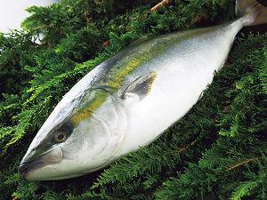 7596 - (株)魚力  ここの優待再開決定は、3月のことでした。  それから、ここの株価が上がって来ましたが、最近は、さら