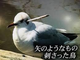 3656 - KLab(株) hyaとかいう童貞神逆指標wwwwww