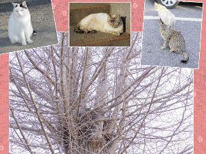 しるし こんばんは2  今日 会った猫ちゃんたち🐱 木登り猫ちゃん、かくれんぼしてます~('-&