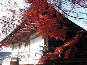 第2の人生を楽しみましょう・・・ 今日は、京都大原三千院に、団塊世代の友の方々と一緒に行きました。  紅葉が綺麗に咲き誇っているのでは