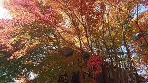 関東 バイク乗りの写真館 ( ´∀` )b イケさん、みなさん こんばんは😉 いつも美しい写真をありがとうございます✨ それぞれに、秋晴れを楽し