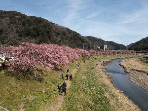 関東 バイク乗りの写真館 ( ´∀` )b みなさん~こんばんは♪♪ イケさんもお久し振りで…イケさんも走り始めましたね♪♪ また