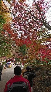 関東 バイク乗りの写真館 ( ´∀` )b 鷲子神社の秋です。  らしい秋、やっと見れました🎵(*´-`)