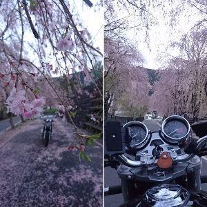 関東 バイク乗りの写真館 ( ´∀` )b イケさん、みなさん こんばんは😉 いつも楽しい写真をありがとうございます✨  花冷え。 haruさん