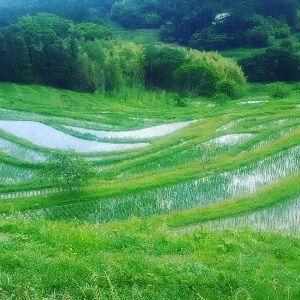 いつまでバイクで走り続けられるか・・・ 梅雨入り前に一走りしてきました。 千葉に移住した仲間の先導で計4台、棚田の観光とハマグリ食べ放題を盛