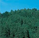 1911 - 住友林業(株) 木の住処は、温もりあって親しみやすい・・・ 森林は、地球温暖化の防波堤~ 国産木質ペレットも技術開発