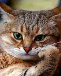 猫、ひろっちゃった > 猫に襲われるとは 猫に襲われる事したんだろ