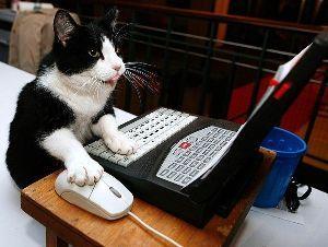 猫、ひろっちゃった 耳を倒し威嚇するほど何をした