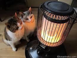 猫、ひろっちゃった 寒くなってきましたねぇ ペット猫カテの皆さん 風邪ひかない様に インフルエンザに気を付けて 過ごして