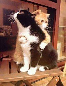 猫、ひろっちゃった ケダモノ加害者とうとうここまで  来たか猫殺しが辞められず発狂開けても暮れても  猫狩りの事しか言わ