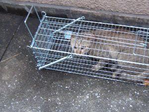 猫、ひろっちゃった そうですね  ケダモノ被害者が  立ち上がって  ケダモノは  これですね