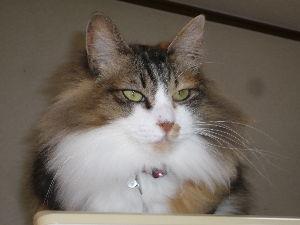 猫、ひろっちゃった 皆さんおはようございます。 今日も良い天気に恵まれ、レガネット(スーパー)で、弁当・つまみを買って花