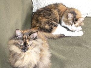 猫、ひろっちゃった こんばんは!   猫好きな皆さん、我が家は歴代 庭で倒れた猫を保護して家猫になっています。 過去に、