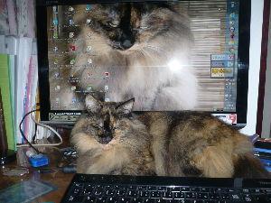 猫、ひろっちゃった 43116 おいらニャース さん   こちらこそ宜しくお願いします。            子供の頃