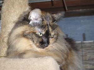 猫、ひろっちゃった  こんばんは、 吾輩は猫である。   名前は「こより」、母が眼が寄っていたので「より」という名だった