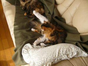 猫、ひろっちゃった 我が家は、猫二匹の上に、自称女王の嫁がいる。  トイレの掃除もしない、食事の世話もしない。   だけ