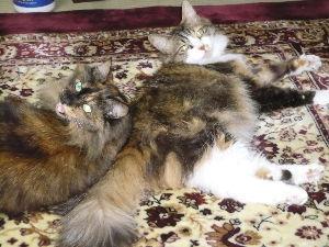 猫、ひろっちゃった 同士の皆様へ   「飼い主拾っちゃった。」と言うトビを立ち上げたい。  良い飼い主をひろった「にゃん