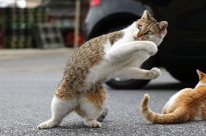 猫、ひろっちゃった カメハメ波を使う猫発見