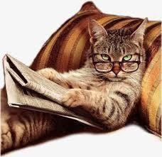 猫、ひろっちゃった 猫狩り人が各地で暴れてる様ですよ 猫狩り注意報がでてます