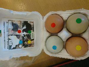 朝靄の中で。。。 こんな卵もありました!