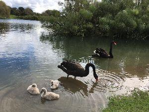 のんびり海外生活【ニュージーランド編】 暦の上では9月は春という話しですが・・・   春の嵐は吹き荒れてるモノの? まだまだ結構寒かったりす