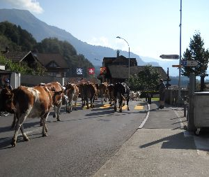 2012年ヨーロッパの田舎の旅 1 続き  9月10日(晴れ)  帰国の日となった。アパートメントの経営者のおばさんが9時過ぎにやってき