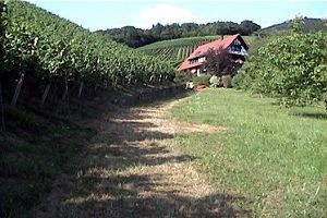 2012年ヨーロッパの田舎の旅 1 ザスバッハヴァルデン続き   途中、ペンションに至る道路の左側に広がっているブドー畑です。この道から