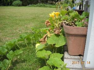 2012年ヨーロッパの田舎の旅 1 はくしょん 様   お心遣いありがとうございます。幸いにも、わたしの住んでいる近辺では、豪雨による水