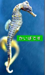 2372 - (株)アイロムグループ 海馬でしたねw