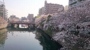 福祉の仕事だ全員集合。 桜も満開、ピークを迎えて 一部は散り始めました 明日から新年度 事故なく、怪我せず、病気せず 福祉の