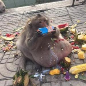 9424 - 日本通信(株) おさるさんは毎夜、高カロリーな夜食を食してる見たいなので、恐らくこんなメタボ猿になっていると思うでぇ
