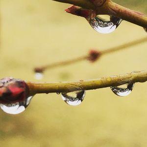 カラオケ好きの人~ この雨が、 雪花に変わるかも…  明日は、なごり雪となるのかな?