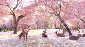 4563 - アンジェス(株)  ◎ 今年の春(●^o^●)    観光客の居ない奈良の風景です\(^o^)/    人混みの無いこ