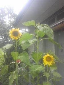 憩の家 春真っ盛り! いろいろな花が咲いてくると 明るい気分になりますね。(*^_^*)  今週の月曜日、家