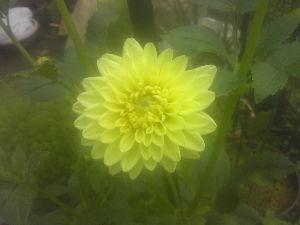 憩の家 今日は肌寒い一日でした。  我が家では 花壇にグラジオラスとカンナを植えました。 野菜はキュウリとミ