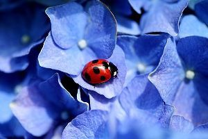 チョットね、赤い花と白い花を!  相性という占い本や週刊誌雑誌などでよく目にする観念論用語を用いてるのを散見する。思想が確立できない