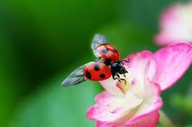 チョットね、赤い花と白い花を! あれはゴキブリかカブトムシか?   近在のホームセンターへ行ってみた。  入口付近にミツバチとカブト